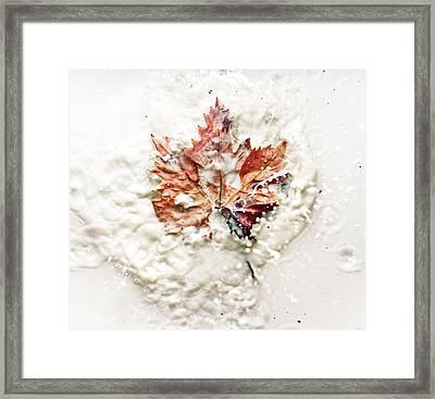Leaf Leap Framed Print