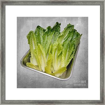Leaf Lettuce Framed Print by Andee Design