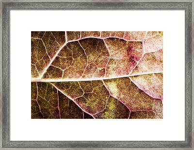 Leaf Lines Framed Print by Christine Smart