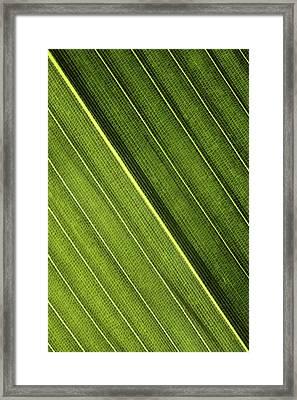 Leaf Lines I Framed Print by Natalie Kinnear