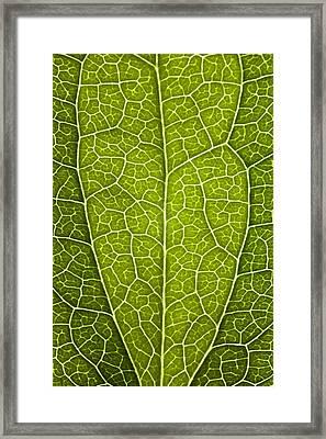 Leaf Lines V Framed Print by Natalie Kinnear