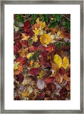 Leaf Litter Framed Print by Kathleen Bishop