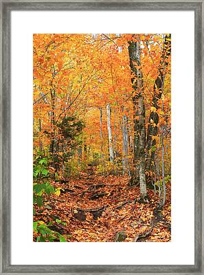 Framed Print featuring the photograph Leaf Littered Path by Alicia Knust