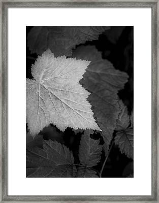 Leaf Me Alone Framed Print by Jon Glaser