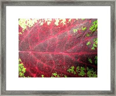 Leaf Me Be Framed Print by Mike Podhorzer