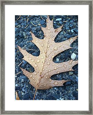 Leaf Framed Print by Michelle Simard