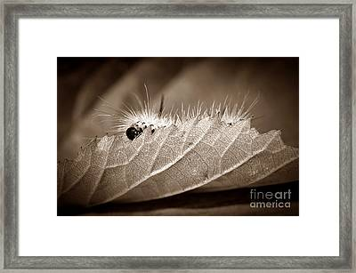 Leaf Muncher Framed Print by Luke Moore