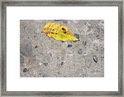 Leaf Of Life Framed Print