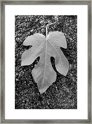 Leaf On Bark Framed Print by Andrew Brooks