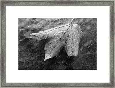 Leaf On Glass Framed Print
