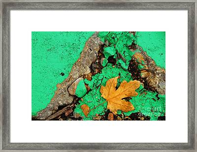 Leaf On Green Cement Framed Print by Amy Cicconi