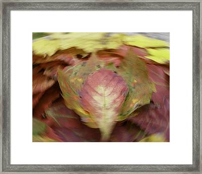 Leaf On Leaves 1 Framed Print