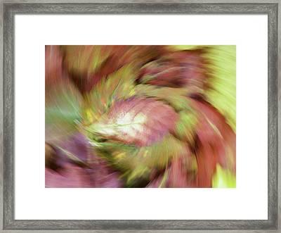 Leaf On Leaves 3 Framed Print