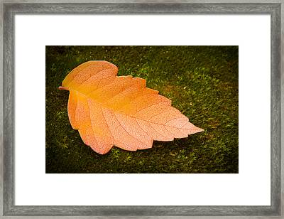 Leaf On Moss Framed Print by Adam Romanowicz