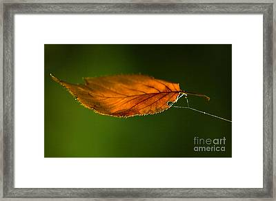 Leaf On Spiderwebstring Framed Print by Iris Richardson
