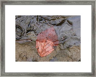 Leaf On The Riverbank Framed Print by Paula Tohline Calhoun