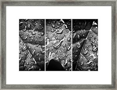 Leaf Panels Framed Print by John Rizzuto