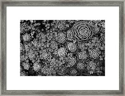 Leaf Patterns Framed Print by James Brunker