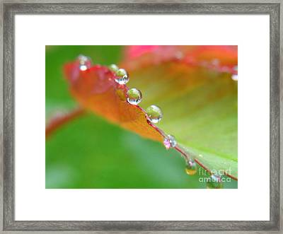 Leaf Pearls Framed Print by Patti Whitten