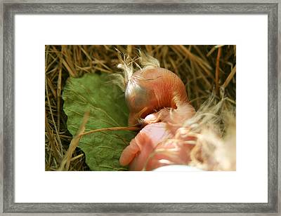 Leaf Pillow Framed Print by Shane Holsclaw