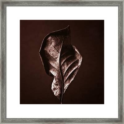 Copper Gold Red Brown Nature Still Life Art Work Photograph Framed Print by Artecco Fine Art Photography