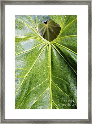 Leaf Shape Framed Print by Eyzen M Kim