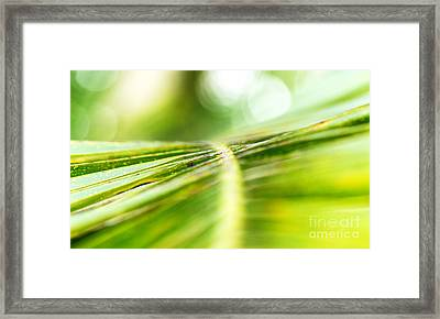 Leaf Shapes V Framed Print by Eyzen M Kim