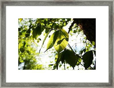 Leaf Space One Framed Print by Jeremy Ashburn