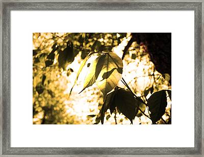 Leaf Space Two Framed Print by Jeremy Ashburn