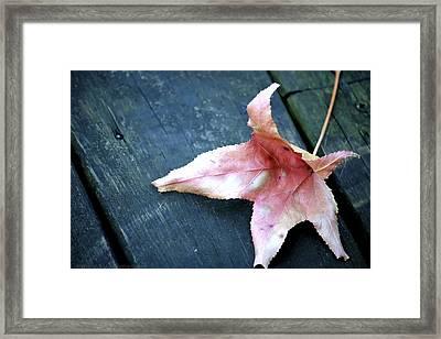 Leaf Framed Print by Stacie  Goodloe