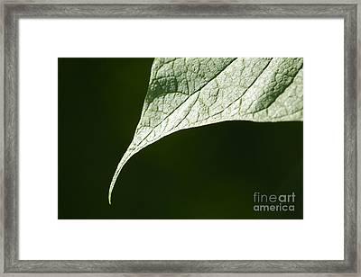Leaf Framed Print by Tony Cordoza