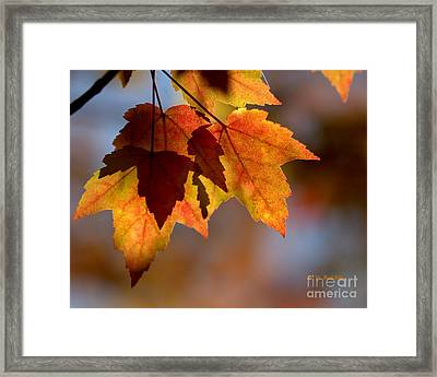 Leaf Upon Leaves Framed Print