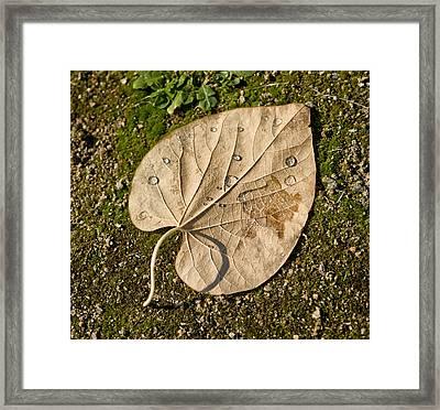 Leaf With Drops Framed Print