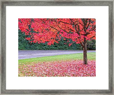 Framed Print featuring the photograph Leaf With Me by Wendy McKennon
