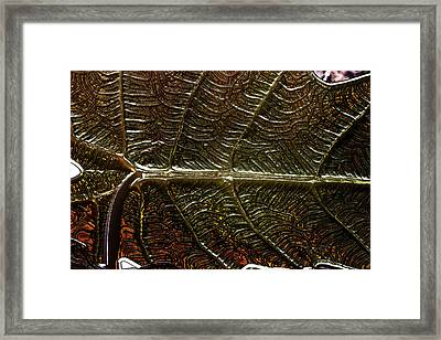 Leafage Framed Print by Richard Thomas