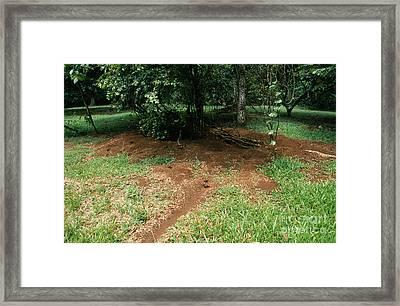 Leafcutter Ant Nest Framed Print
