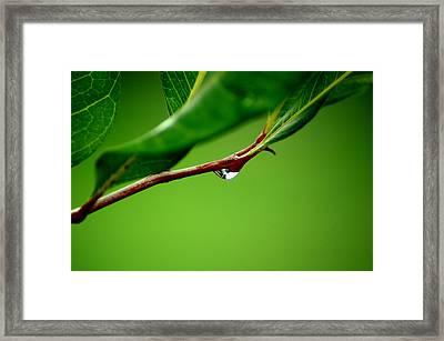 Leafdrop Framed Print