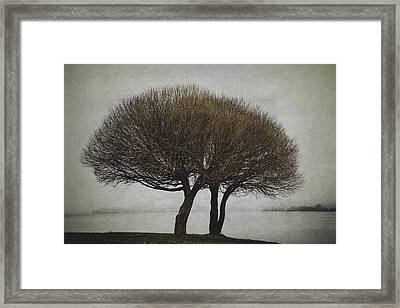 Framed Print featuring the photograph Leafless Couple by Ari Salmela