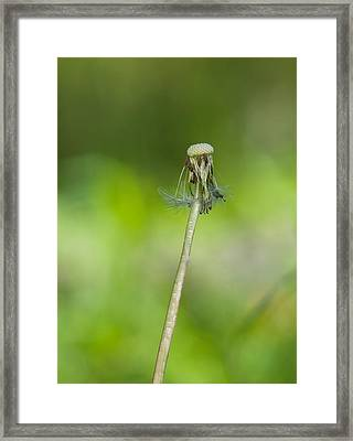 Leafless Flower Framed Print by Carlos V Bidart
