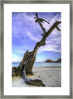Leafless Framed Print by Mario Legaspi