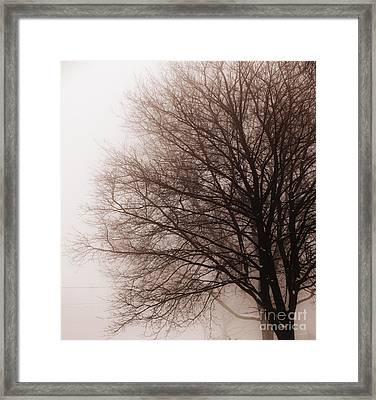 Leafless Tree In Fog Framed Print