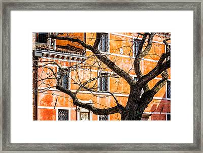 Leafless Tree In Venice Framed Print