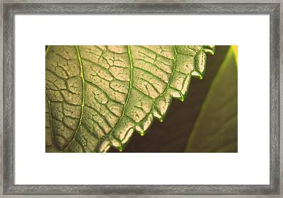 Leaf's Edge Framed Print by Jhoy E Meade