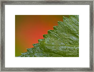 Leafy Framed Print by Heiko Koehrer-Wagner