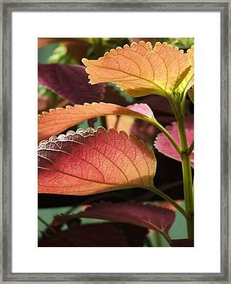 Leafy Plant Framed Print by Nelson Watkins