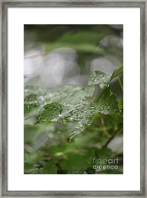Leafy Raindrops Framed Print