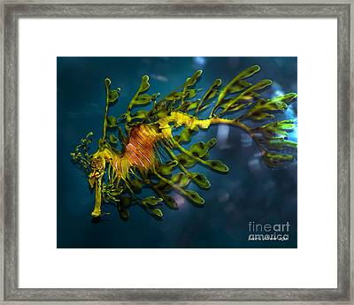 Leafy Sea Dragon Framed Print by Artist and Photographer Laura Wrede