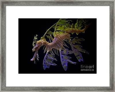 Leafy Seadragon Framed Print by Carol Groenen