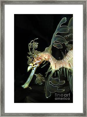 Leafy Seadragon Framed Print
