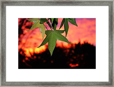 Leafy Sunset Framed Print by Sabre Tooth